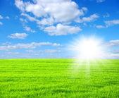 绿色的原野 — 图库照片
