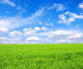 Fältet och vita moln — Stockfoto