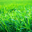 Background green lawn — Stock Photo #5479918