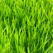 Green lawn — Stock Photo #5578186