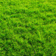 Green lawn — Stock Photo #5640339