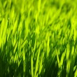 Background green lawn — Stock Photo #5640345