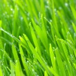 Background green lawn — Stock Photo #5640348