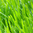 Background green lawn - Stock fotografie