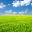 Field and white clouds — Stock Photo #5840366