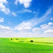 Field and white clouds — Stock Photo #5840375