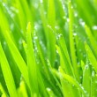 Green lawn — Stock Photo #6266749
