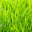 Green lawn — Stock Photo #6266752
