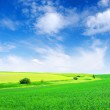 Field and white clouds — Stock Photo #6267033