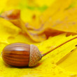 Acorns — Stock fotografie #6524254