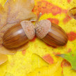 Acorns — Stock Photo #6524351