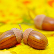 Acorns — Stock Photo #6524418
