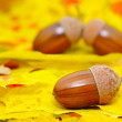 Acorns — Stock Photo #6524554