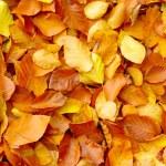 Fallen autumn leaves — Stock Photo #6524705