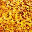 Fallen autumn leaves — Lizenzfreies Foto