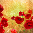 Grunge poppies background - Stock fotografie