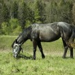 Horse in grass field — Photo