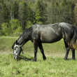 Horse in grass field — Foto Stock
