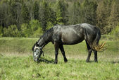 Horse in grass field — Stock Photo
