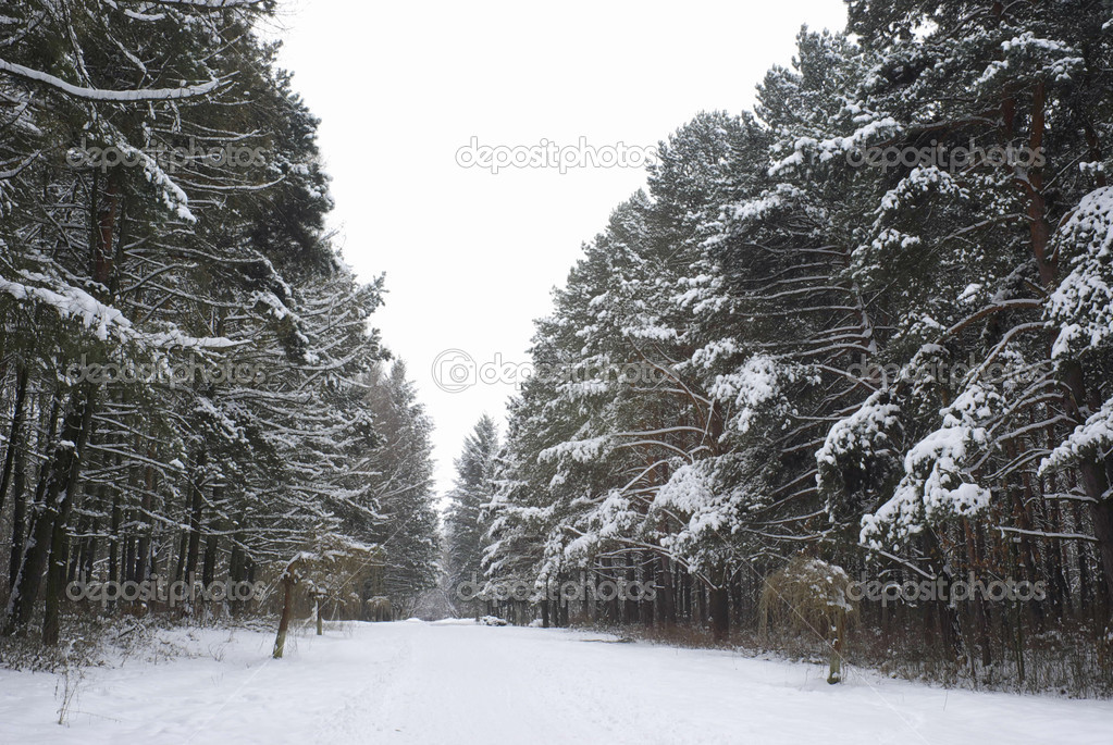 Cold and snowy winter road  — Stock Photo #5478283