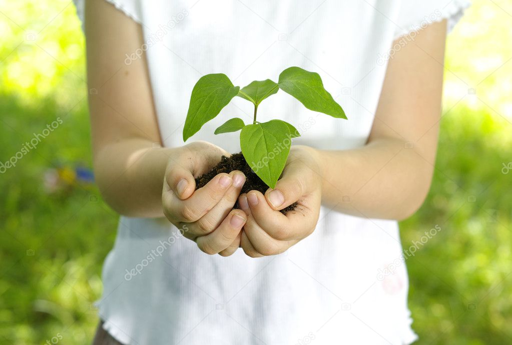 Plant in the girl hands  — Stock Photo #6330014