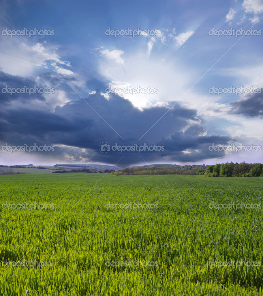 Green meadow under blue sky with clouds — Stock Photo #6334656