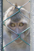Animal welfare — Stock Photo
