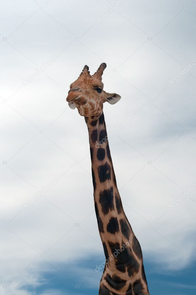 Shot of giraffe with long neck and blue sky — Stock Photo #5838936