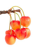 Sweet cherry — Foto Stock