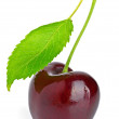 Cherry and green leaf — Stock Photo #5868786