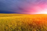 Sonnenuntergang über einem feld — Stockfoto