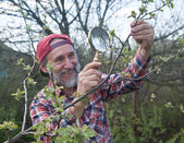 A man inspects apple tree branch in search of vermin — Stock Photo