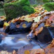 A slow moving stream in a forest decked out in fall colors — Foto de Stock