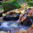 A slow moving stream in a forest decked out in fall colors - Photo