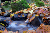 A slow moving stream in a forest decked out in fall colors — Stok fotoğraf