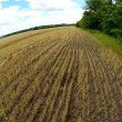 Wheat field after harvest - Foto Stock