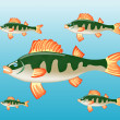Fish perch in water — Stock Vector