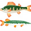Two freshwater fish perch and pike — Stock Vector #5428500