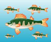 De USS perch van vis in water — Stockvector