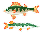 Two freshwater fish perch and pike — Stock Vector