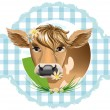 Vector de stock : Cows with flowers in their teeth