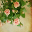Vintage pink roses, background - Stock Photo