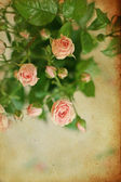 Vintage pink roses, background — Stockfoto