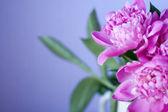 束美丽的鲜花 — 图库照片