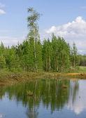 木製の池 — ストック写真