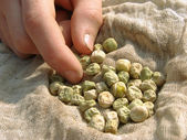 Hand with peas seeds — Stock Photo