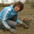 Planting potato — Stock Photo #5487700