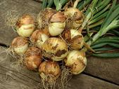 Fresh onion bulbs — Stock Photo