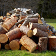 Pile of wooden logs - Stock Photo