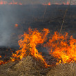 Burning dry grass — Stock Photo #6255614